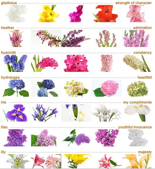 List Of Flowers Names